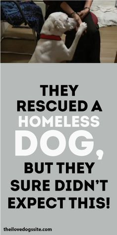 The Rescued A Homeless Dog But They Sure Didn't Expect This!!