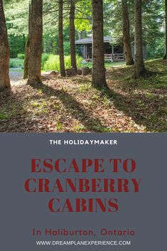 Escape to Cranberry Cabins in Haliburton, Ontario, Canada | www.DreamPlanExperience.com Places To Travel, Places To See, Garden Line, Eagle Lake, Fire Pit Area, Local Attractions, Tree Tops, Modern City, Old World Charm