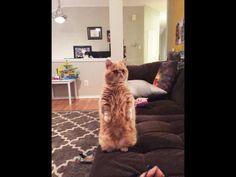 George, el gato parado