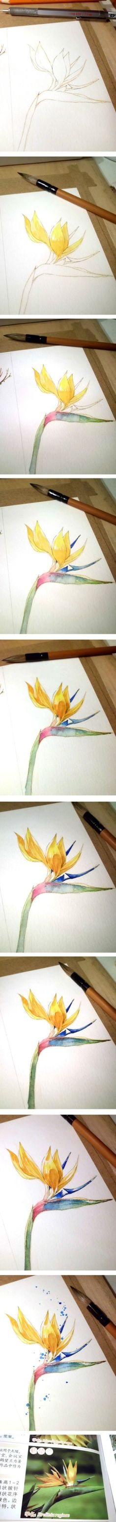 Yellow flower step by step watercolor painting. (Drawing Step Pencil)