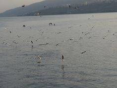 Seagulls from Boat Sea Of Galilee, Boat, Animals, Dinghy, Animales, Animaux, Boats, Animal Memes, Animal