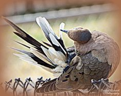 Primping by Bobbee Rickard prints, canvas prints and more; wall art for home decor, business decor and as gifts; click on image