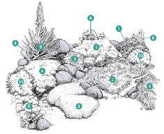 1. Aurinia saxatilis (Ауриния скальная)  2. Cerastium tomentosum (Ясколка войлочная)  3. Dianthus gratianopolitanus (Гвоздика серо-голубая)  4. Phlox subulata (Флокс шиловидный)  5. Sagina subulata (Сагина игольчатая)  6. Sedum telephium ssp. ruprechtii (Очитник Рупрехта)  7. Sempervivum tectorum (Молодило кровельное)  8. Sisyrinchium angustifolium (Голубоглазка узколистная)  9. Yucca filamentosa (Юкка колючая)  10. Zauschneria californica (Заушнерия калифорнийская)