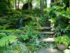 Shade garden with waterfall feature and steps. I love all of the ferns. The waterfall looks so natural. Would that I could hear the waterfall!