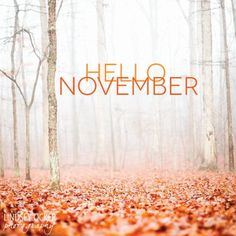 Hello November - New month, fresh starts, positive thoughts! Days And Months, Months In A Year, Seasons Months, 12 Months, Hallo November, Sweet November, November Rain, November 1st, Fall Inspiration