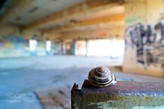 snale in an abandoned place by Vartzbed #architecture #building #architexture #city #buildings #skyscraper #urban #design #minimal #cities #town #street #art #arts #architecturelovers #abstract #photooftheday #amazing #picoftheday