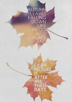 Autumn leaves falling down
