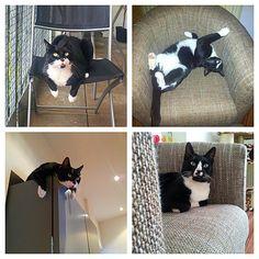 Luniz Katze | Pawshake