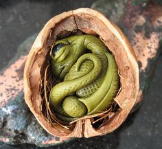 Baby Dragon in a nut shell by Feyth on Folksy