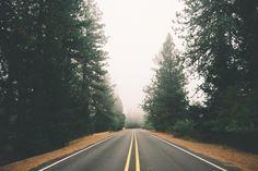 road, street, forest, fog