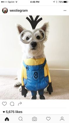 - Tap the pin for the most adorable pawtastic fur baby apparel! Youll love the dog clothes and cat clothes! Minion Dog Costume, Cute Dog Costumes, Animal Costumes, Halloween Costumes For Dogs, Dogs In Costumes, Zombie Costumes, Puppy Costume, Halloween Couples, Group Halloween