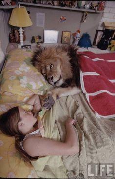 Alucinante el reportaje de Melanie Griffith con su león Neil, en 1971. ¿Se os ocurre una mascota mejor para una triple Leo?