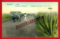 POSTAL, MATANZAS, CUBA, TRANSPORTE DE HENEQUEN, P71200 (Postales - Postales Extranjero - América - Cuba)