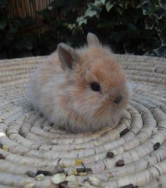 Ce bébé lapin se fond sur la paille du panier
