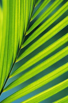 love-knot:    Sunlit Palm Frond…