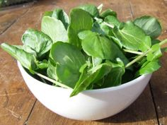 French 'Fontaine' Watercress