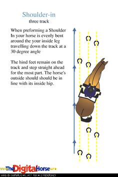 Dressage SHOULDER-IN