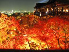 「清水寺」から見下ろす美しい秋の紅葉。夜にはライトアップされ、目の前に幻想的な世界が広がります。