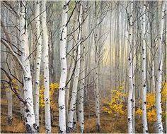 Billedresultat for birketræ