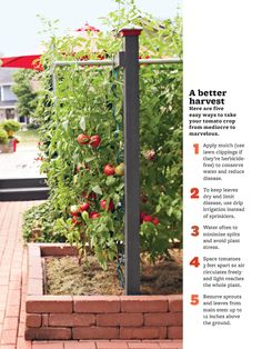 Tomato tips - I like this frame & planter