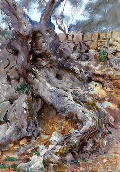 """""""Olive Trunk,"""" 1908, John Singer Sargent. Watercolor, gouache and pencil."""