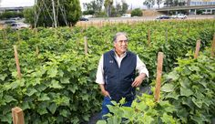 Commercial farming...in your subdivision? - Fortune