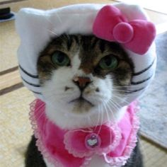 ❤❤❤ I love that I'm not the only person to dress a cat. CUTE!