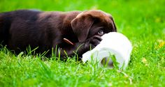 Accidents, no more! Here are some helpful tips on how to potty train your puppy!