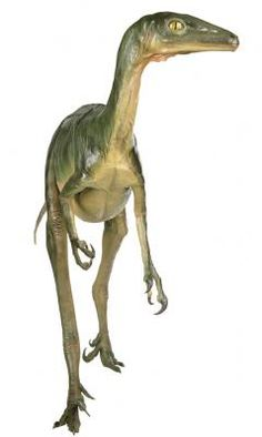 Troodon-predatory bird-like theropod The Good Dinosaur, Dinosaur Art, Dinosaur Fossils, Jurassic World, Jurassic Park, Prehistoric Creatures, Prehistoric Age, Ancient Fish, Fiction