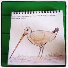 godwit drawing - Google Search Bird, Google Search, Drawings, Inspiration, Animals, Biblical Inspiration, Animales, Animaux, Birds