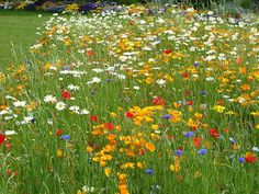 Guerrilla Gardening is not a modern phenomenon or short-term garden trend. Delphinium, Chrysanthemum, Camping Images, Most Popular Flowers, Seed Bombs, Garden Painting, Flowers Perennials, Guerrilla, Daffodils