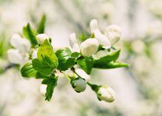 Flower by Ekaterina Shevi on 500px
