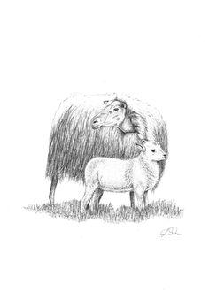 Zeichnung Schaf mit Lamm. Bleistift, Graphit, Din A4