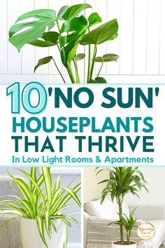Plants For Patio, Plants For Bathroom, Best Plants For Bedroom, Easy House Plants, Best Indoor Plants, House Plants Decor, Bedroom Plants, Cool Plants, Plants For Low Light