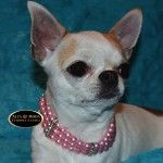 http://altamodaeuropeacanina.com/es/collares-y-correas/911-collar-elegante-de-perlas-rosas.html