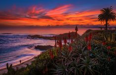 Colors of Christmas at Montage Laguna Beach - Travel Caffeine