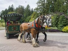 Horse-drawn controversy: Animal advocates call for ban on tourist carriages