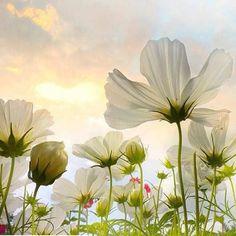 #Repost @corno_gabriele #awesome #amazing #cool #colors #magic #majestic  #lit #light #love #life #Hope #Harmony #Horizons #Idyll #Imagine #Inspired #Incredible #Follow #PhotOfTheDay #Wonderland #Fairytale #white #flowers #wildflowers #awakening #mesmerized