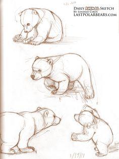 sketching brown bears | ... .lastpolarbears.com/dailysketch/daily-animal-sketch-baby-polar-bears