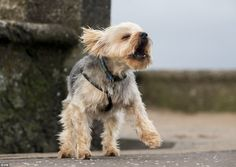 Dougal the dog appeared a little bedraggled on the seafront in Saltcoats, on the west coast of North Ayrshire, as Storm Abigail hits the UK