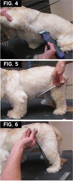 Shih Tzu Makeover & Groomer to Groomer Magazine Source by annelesley The post Shih Tzu Makeover Dog Grooming Styles, Dog Grooming Tips, Pet Tips, Shih Tzu Dog, Shih Tzus, Pekinese, Dog Haircuts, Lion Dog, Malteser