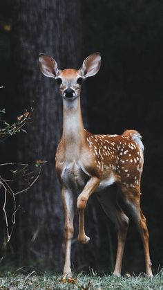 Animals And Camping Forest Animals, Nature Animals, Woodland Animals, Animals And Pets, Wildlife Nature, Safari Animals, Deer Photos, Deer Pictures, Cute Animal Pictures