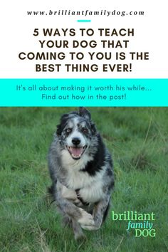 You'd love your dog to hear you call her and race back to you - and yes, you can get this! Learn these 5 ways to develop a stunning recall. Brilliant Family Dog is changing the world, one dog at a time | FREE EMAIL COURSE | #newpuppy, #dogtraining, #newrescuedog, #puppytraining, #dogbehavior, #dogrecall, #dogwhistle, #dogcomingwhencalled | www.brilliantfamilydog.com Therapy Dog Training, Dog Training Books, Dog Training Courses, Dog Training Tips, Potty Training, Dog Minding, Puppy Biting, Easiest Dogs To Train, Dog Training Techniques