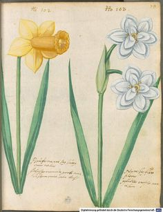 Hortulus Monheimensis -- commissioned in 1615
