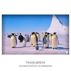 Penguins! Like real penguins in ANTARTICA!!!Featured photo by Lee Abbamonte the youngest American to go to every country in the world... Travel | Wanderlust | TravelBreak.net