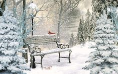 Winter Images, Winter Cabin, Winter Scenes, Outdoor Furniture, Outdoor Decor, White Christmas, Winter Wonderland, Scenery, Bench