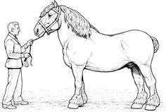 Disegni Da Colorare Di Cavalli Selvaggi.9 Fantastiche Immagini Su Cavalli Cavalli Disegni E