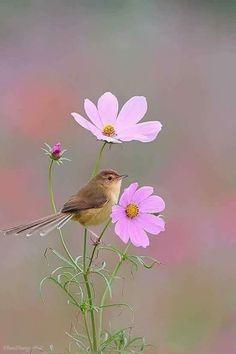 Birds of a feather Cute Birds, Pretty Birds, Beautiful Birds, Animals Beautiful, Cosmos Flowers, Flowers Nature, Exotic Birds, Colorful Birds, Flower Phone Wallpaper