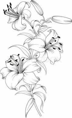 Ilona Trelej (notitle) Ilona Trelej The post Ilona Trelej appeared first on Blumen ideen. Tattoo Sketches, Drawing Sketches, Tattoo Drawings, Drawing Tips, Drawing Ideas, Art Floral, Lilies Drawing, Drawing Flowers, Lilly Flower Drawing
