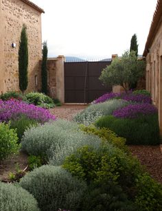 Have to go with xeriscaping and low water in the cottage garden. Like these plants in the Jardin Toledo Gravel garden, xeriscaping, dry garden, mediterranean garden. Dry Garden, Gravel Garden, Gravel Patio, Side Garden, Pea Gravel, Garden Water, Garden Pond, The Secret Garden, Modern Garden Design